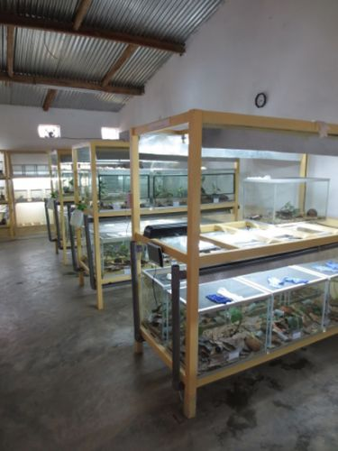 Captive breeding facility inside view - Mitsinjo