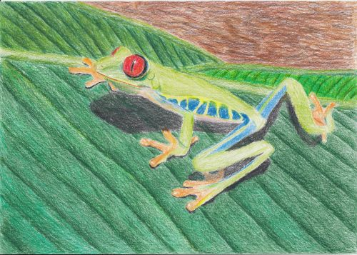 Honorable Mention, Zakiyah Hasanah, Indonesia, Frogs Are Green Kids Art Contest ages 10-12