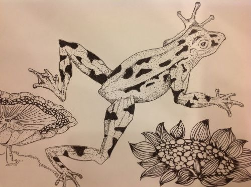 2nd Place Winner, Lee Xin Yee, Malaysia, Frogs Are Green Kids Art Contest, Best Black and White