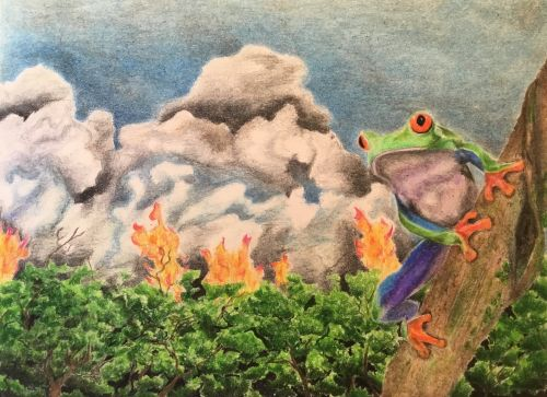 1st-A Frog's View, by Jude Atchley, Age 16, McNair Academic High School, Jersey City, NJ, USA, 2019