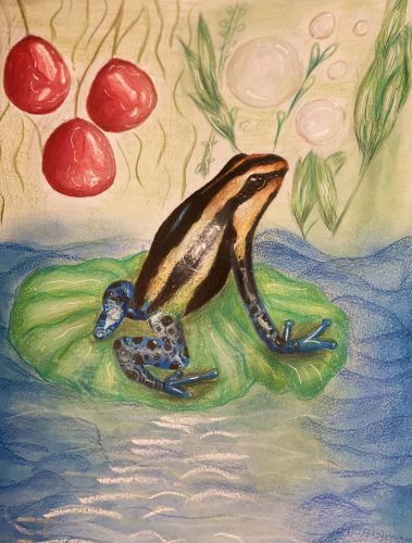 Nethra Chari, 12 years old, USA, poison dart frog, Honorable Mention winner 2020