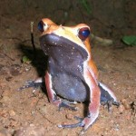 Frogs—Nature's Bug Zappers