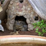 Toad Abodes