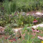 Turn Your Backyard into a Wildlife Habitat