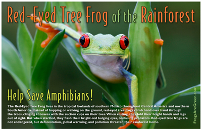 red-eye-frog-poster-blog-sm