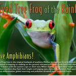 Many Thanks, and a Red-Eyed Tree Frog for You!