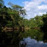 Yasuni National Park, Ecuador: An Amphibian Eden