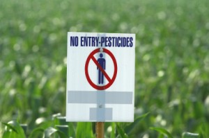 Warning in a Cornfield