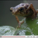 LIFE: New Discovery Channel Series (and one amazing toad)