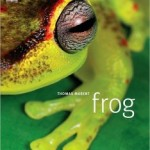 GREEN FRIDAY – Frog Gifts for the Holidays