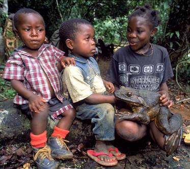 Goliath Frog – The World's Biggest Frog | Frogs Are Green