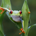 10 Frogs Handsome Enough to Kiss