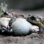 Announcing the Winners of the 2010 Frogs Are Green Photo Contest