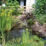 Creating a Wildlife- and Eco-friendly Backyard