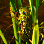 Announcing the Winners of the 2011 Frogs Are Green Photography Contest