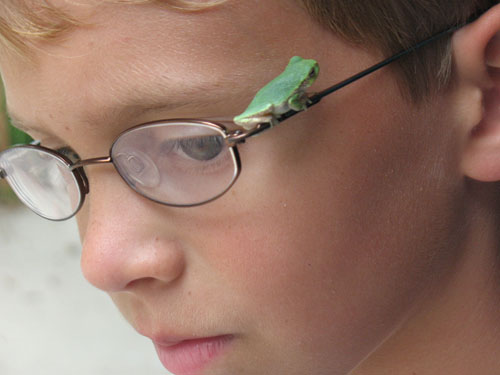"Photograph by Krista Herbstrith who says, ""I was showing my son the frog on the flowers from the garden, when the frog leaped and landed on my son's face,"" Northfield, MN."
