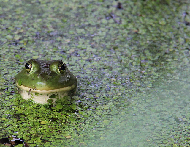 Winner 2012 Frogs Are Green Photography Contest - Sherri Simms