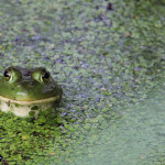 Announcing the Winners of the 2012 Frogs Are Green Photography Contest