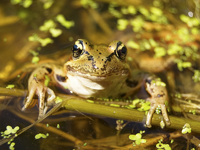 2nd Place 2012 Frogs Are Green Photography Contest - Sara Viernum