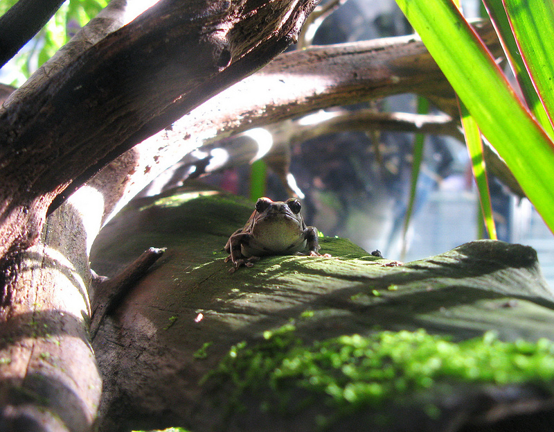 3rd Place 2012 Frogs Are Green Photography Contest - Aaron Wang