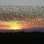 Feeding the Birds for Fall Migration