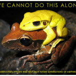 Environmental Attorney and Amphibian Activist Talk Issues on Techno Granny Radio
