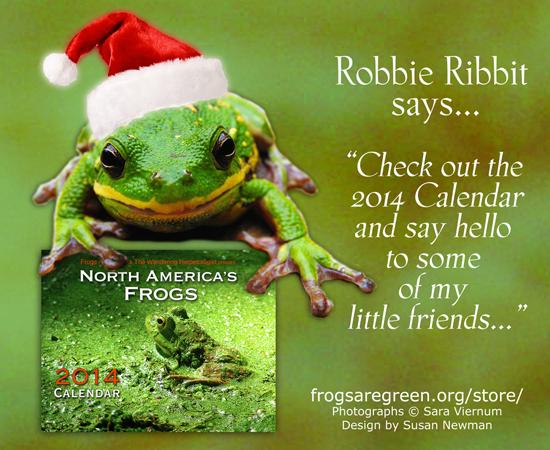 santa frog - hyla gratiosa