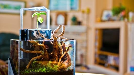 EcoQube close up