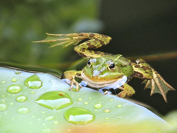 2nd winner - Paul - resting frog