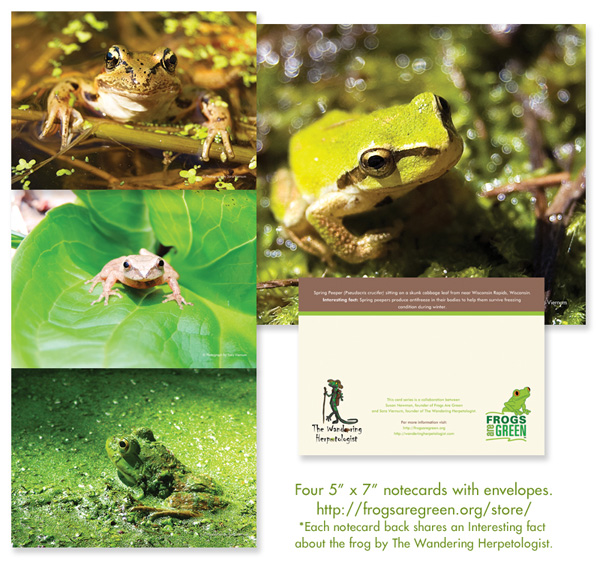 4 frog notecards with photography