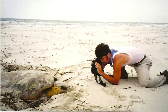 photographing sea turtles