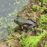 Enhancing Your Eco-Friendly Garden to Attract Frogs and Toads