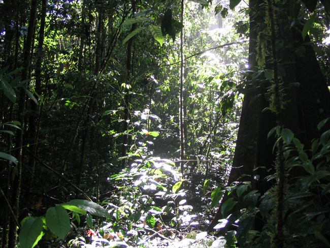 rainforest in Brazil