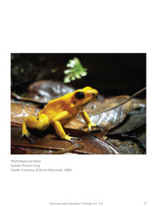 frog-curriculum-photo-1