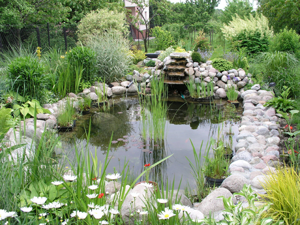 garden pond lush green and beautiful