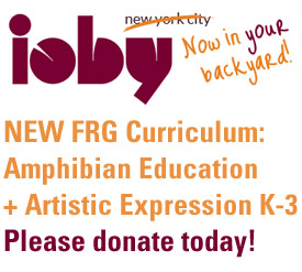 Crowdfunding on ioby - Frogs Are Green curriculum, Amphibian Education and Art Expression K-3