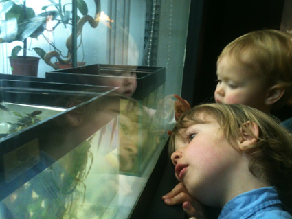 children looking at tadpoles in manchester museum