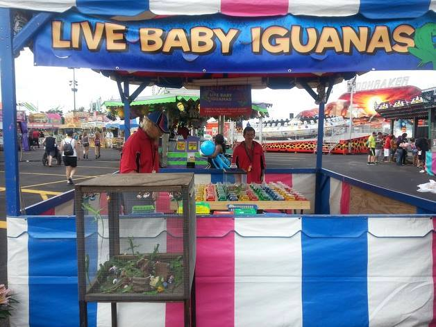 The Ohio State Fair in Columbus featured a booth that offered live iguanas as prizes.