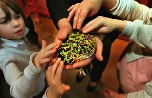 kids petting argentinian horned toad