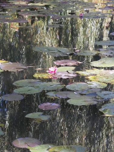 Irwin Quagmire's lily pad home