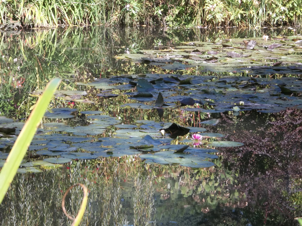 Lily Pad environment of Irwin Q. Wart