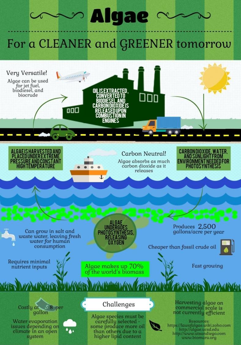 Algae to biofuel - BIOENERGIZEME INFOGRAPHIC CHALLENGE
