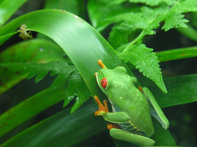 Tree Frog and Bug from EarthRangers.com
