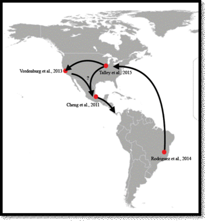 how Bd may have spread through the Americas
