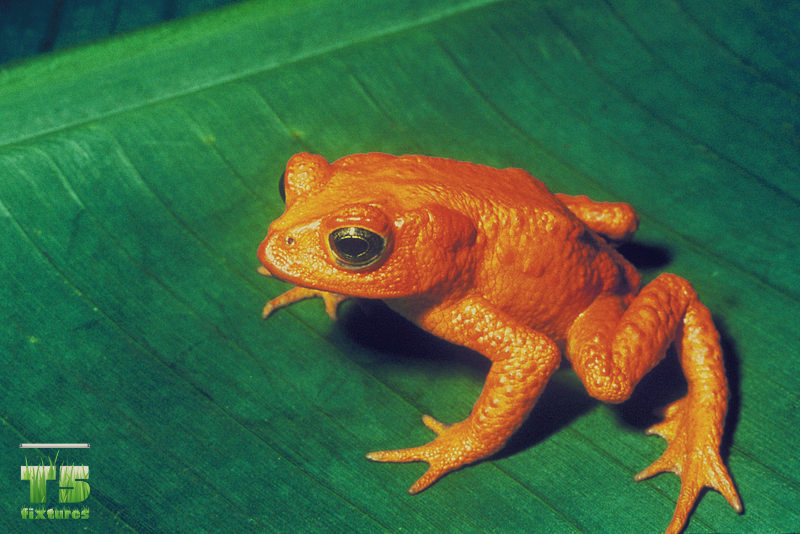 frog_pic