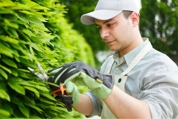 trimming hedges and bushes