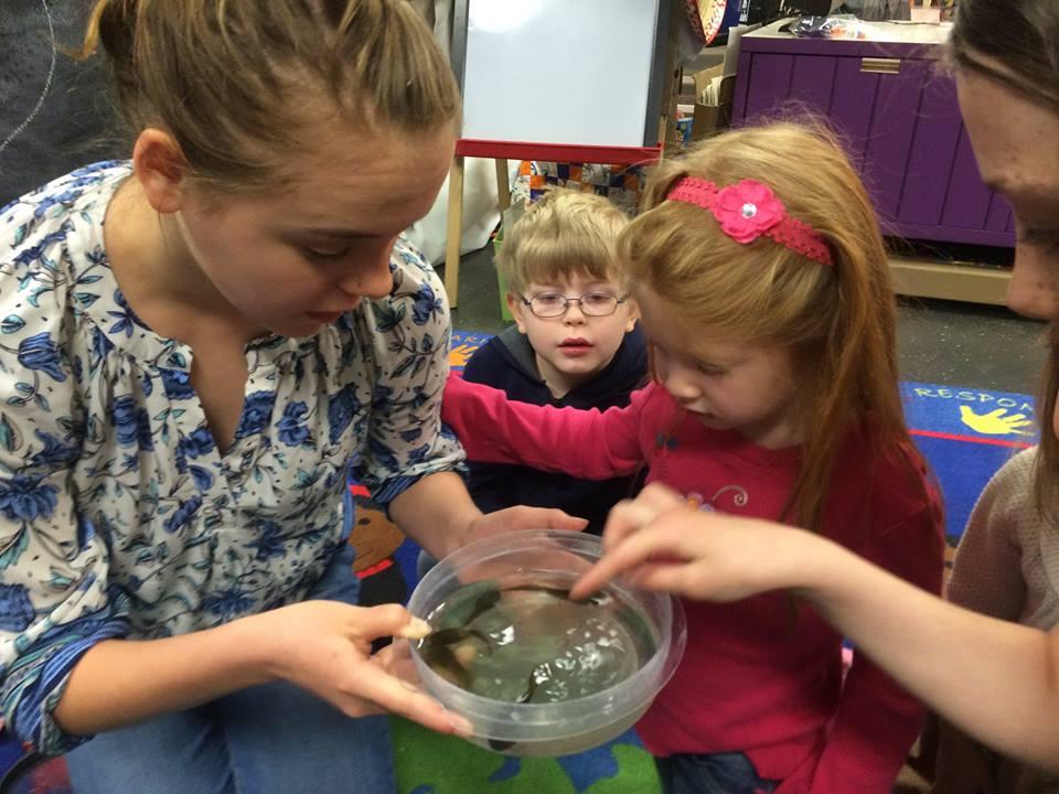 Sarah Brebac examines amphibian