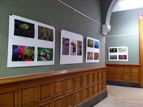 Frogs Are Green showcases international student artworks in City Hall Rotunda