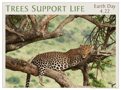 Trees Support Life - Earth Day