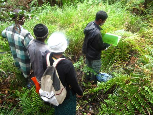 Mantella aurantiaca breeding site patrol at Torotorofotsy Wetland